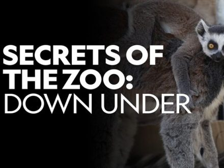 secrets-of-the-zoo-down-under2