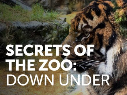 secrets-of-the-zoo-down-under4